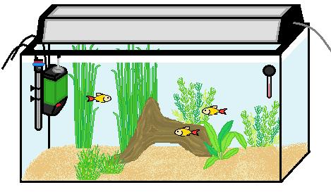 Flott Starta ett akvarium- Steg för steg! - Allmänt - Akvariefisk iFokus WB-67