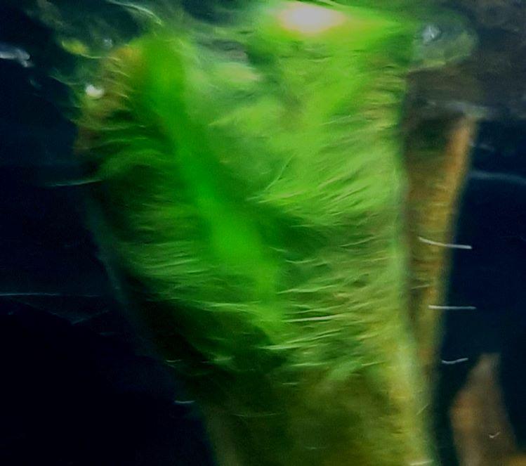 vad är en alg